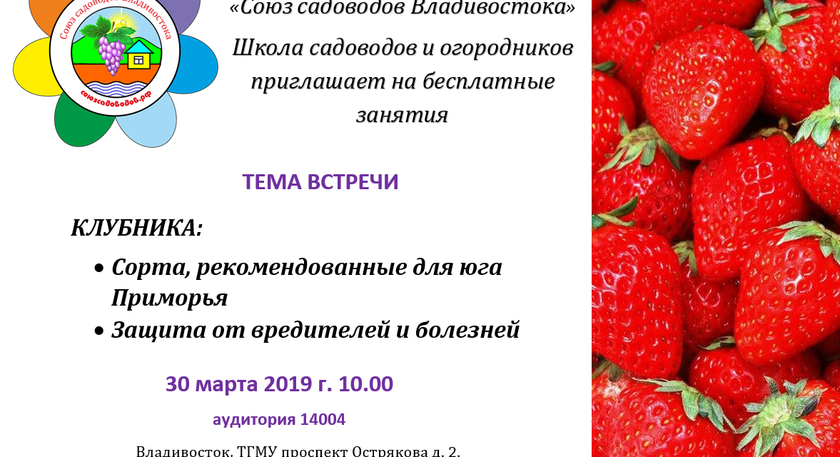 Клубника: Красивый и Вкусный урожай