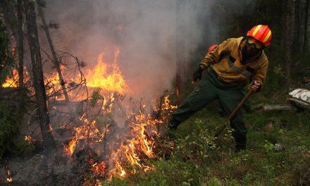 Пожарная безопасность прилегающих лесов, ложится на плечи собственников земельных участков
