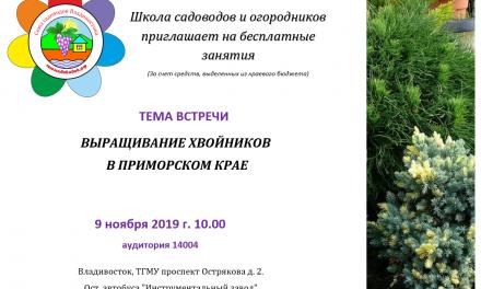 Выращивание хвойных в Приморском крае