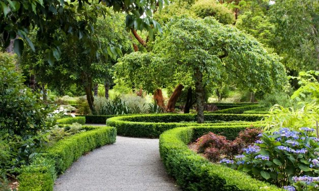 Красивый сад – своими руками. (Регина Викторовна Ким)