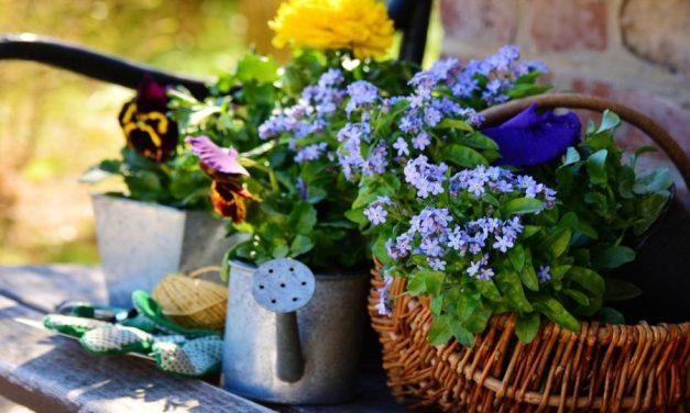 Новый закон о льготах для огородников и садоводов