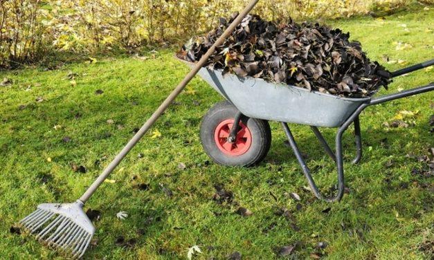Сор из избы: как не получить штраф за мусор на даче